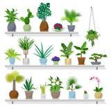Φυτό γλαστρών στο επίπεδο ύφος