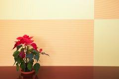 φυτό γραφείων μικρό Στοκ Εικόνες