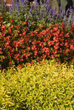 φυτό γραφείων στοκ εικόνα
