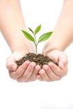 φυτό εκμετάλλευσης μικ&r Στοκ Φωτογραφίες