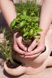φυτό εκμετάλλευσης Στοκ φωτογραφία με δικαίωμα ελεύθερης χρήσης