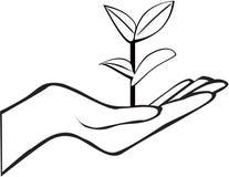 Φυτό εκμετάλλευσης χεριών Στοκ Φωτογραφίες