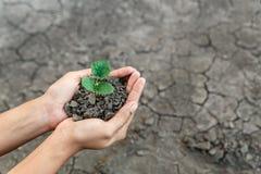 Φυτό εκμετάλλευσης χεριών Στοκ εικόνα με δικαίωμα ελεύθερης χρήσης