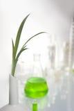 φυτό εκμετάλλευσης χερ Στοκ εικόνα με δικαίωμα ελεύθερης χρήσης