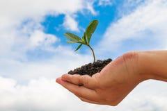 φυτό εκμετάλλευσης χερ Στοκ εικόνες με δικαίωμα ελεύθερης χρήσης