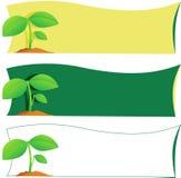 φυτό ετικετών Στοκ φωτογραφίες με δικαίωμα ελεύθερης χρήσης