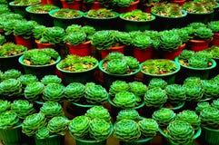 φυτό κάκτων Στοκ Φωτογραφία