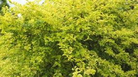 φυτό κήπων Στοκ εικόνες με δικαίωμα ελεύθερης χρήσης