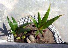Φυτό κήπων Στοκ εικόνα με δικαίωμα ελεύθερης χρήσης