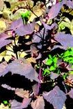 φυτό κήπων Στοκ Φωτογραφία