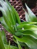 Φυτό και νερό Στοκ Εικόνες