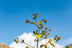 Φυτό και ουρανός Στοκ εικόνα με δικαίωμα ελεύθερης χρήσης