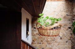 φυτό καλαθιών Στοκ Φωτογραφία