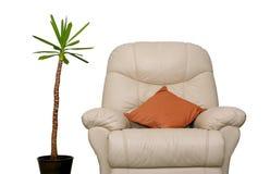 φυτό καναπέδων Στοκ Εικόνες