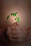 φυτό κατσικιών Στοκ φωτογραφίες με δικαίωμα ελεύθερης χρήσης