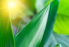φυτό κινηματογραφήσεων σ&e στοκ φωτογραφίες