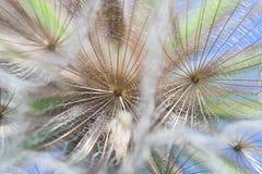 φυτό λεπτομέρειας Στοκ εικόνες με δικαίωμα ελεύθερης χρήσης