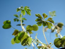 φυτό λεπτομέρειας Στοκ Εικόνες