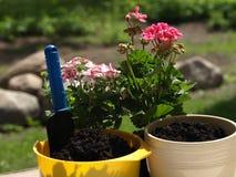 φυτό λουλουδιών Στοκ φωτογραφίες με δικαίωμα ελεύθερης χρήσης