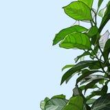 Φυτό με τα πράσινα φύλλα διανυσματική απεικόνιση