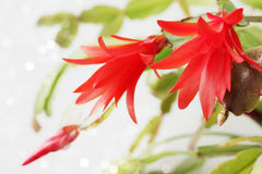 Φυτό με το κόκκινο λουλούδι Στοκ Εικόνες