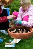 φυτό μητέρων κορών Στοκ εικόνα με δικαίωμα ελεύθερης χρήσης