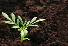 φυτό μικρό Στοκ εικόνες με δικαίωμα ελεύθερης χρήσης