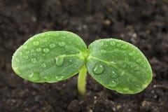 φυτό μικρό Στοκ Φωτογραφία
