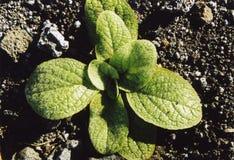φυτό μικρό Στοκ φωτογραφίες με δικαίωμα ελεύθερης χρήσης