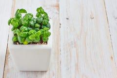 φυτό μικρό Στοκ Εικόνες