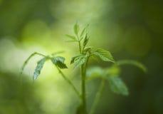 φυτό μικρό Στοκ φωτογραφία με δικαίωμα ελεύθερης χρήσης