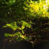 φυτό μικρό Στοκ Φωτογραφίες