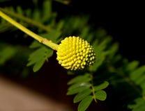 φυτό μορφής Στοκ Εικόνα