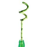 φυτό μπαμπού Στοκ εικόνες με δικαίωμα ελεύθερης χρήσης