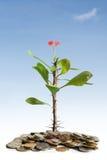 φυτό νομισμάτων Στοκ εικόνες με δικαίωμα ελεύθερης χρήσης