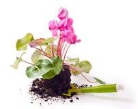 φυτό λουλουδιών Στοκ φωτογραφία με δικαίωμα ελεύθερης χρήσης