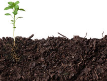 φυτό οφθαλμών στοκ εικόνα