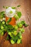 Φυτό πιντών και λυκίσκου Στοκ Φωτογραφία