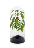 φυτό που προστατεύεται Στοκ Εικόνες
