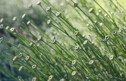 φυτό προτύπων Στοκ φωτογραφίες με δικαίωμα ελεύθερης χρήσης