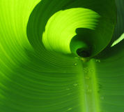φυτό πρωινού δροσιάς Στοκ Φωτογραφίες