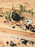 Φυτό σε ένα σπασμένο δοχείο λουλουδιών Στοκ Φωτογραφίες