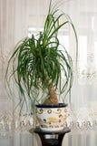 φυτό σε δοχείο Στοκ Εικόνα