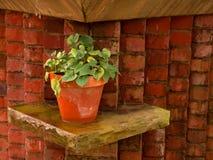 φυτό σε δοχείο Στοκ φωτογραφία με δικαίωμα ελεύθερης χρήσης