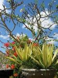 φυτό σε δοχείο Στοκ εικόνα με δικαίωμα ελεύθερης χρήσης