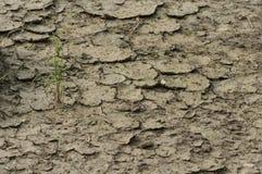 Φυτό σε ξηρό που ραγίζεται Στοκ Εικόνες