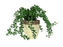 φυτό σε δοχείο Στοκ Φωτογραφία