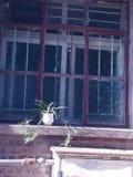 φυτό σε δοχείο Στοκ Εικόνες