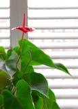 φυτό σπιτιών Στοκ Εικόνες