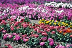 φυτό σπορείων Στοκ Φωτογραφία